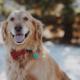 Attivo il servizio di pet therapy alla Fondazione Città di Senigallia